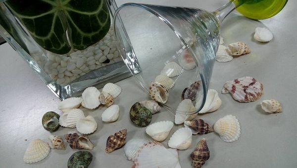 蠟燭裝飾-  貝殼(100克)*1